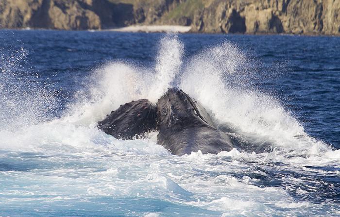 クジラ27