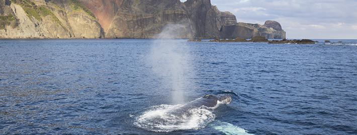 クジラ25