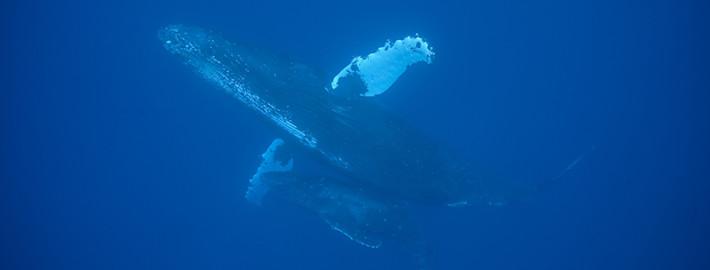 クジラ20