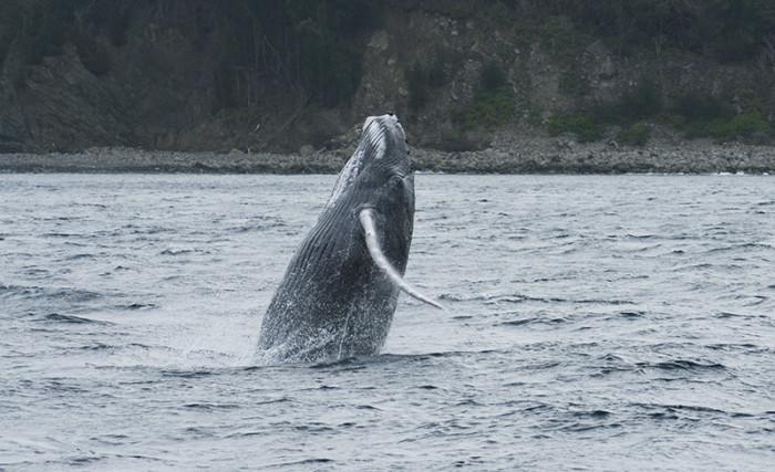 クジラ46