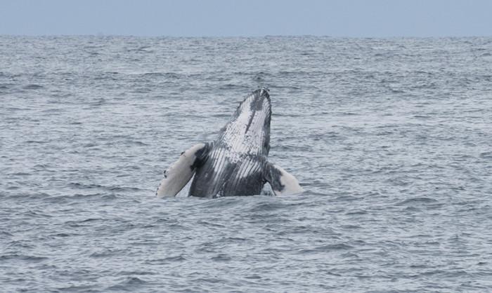 クジラ31