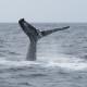 クジラ56