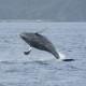 クジラ45