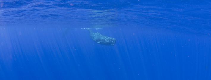 マッコウクジラ6