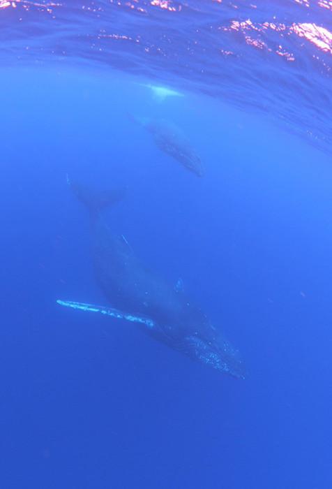 クジラ89