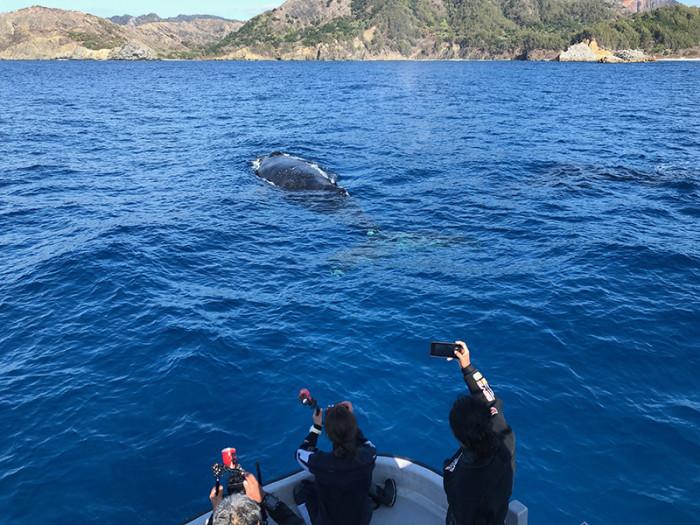 クジラ92