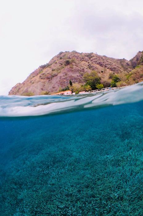 枝サンゴ11