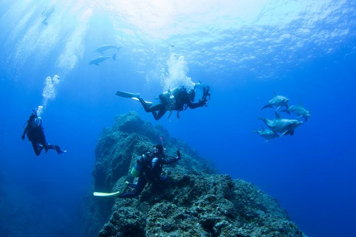 水中イルカ26