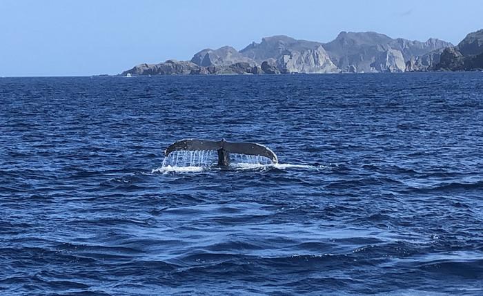 クジラ129