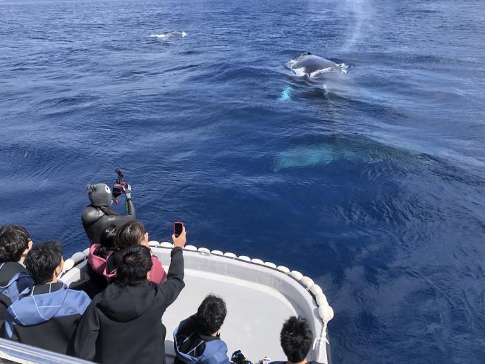 クジラ102