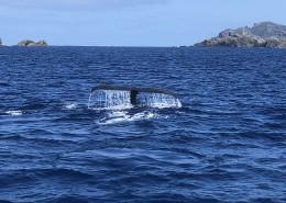 クジラ124