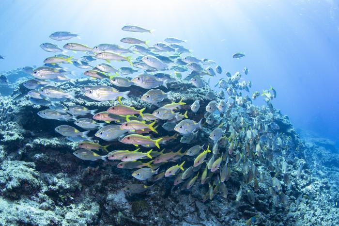 根魚127b