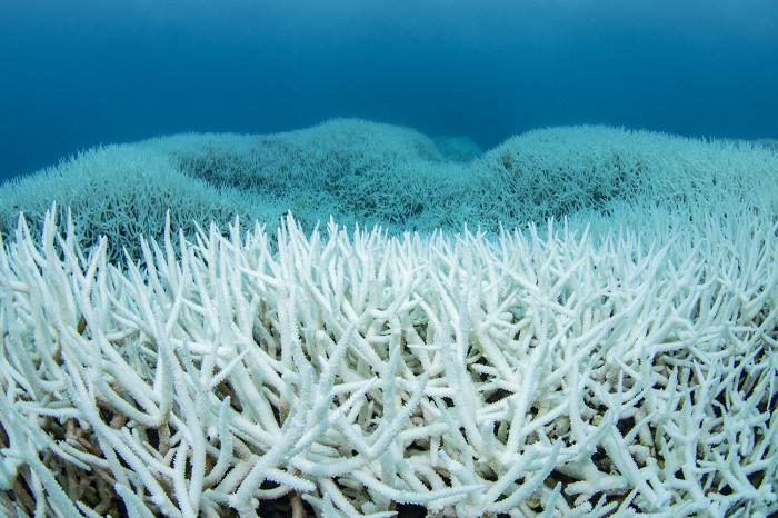 サンゴ白化7b