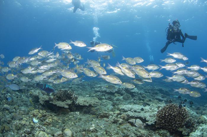 根魚235b