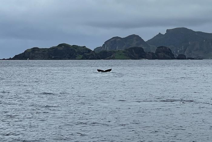 クジラ123b