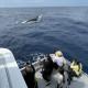 クジラ101b
