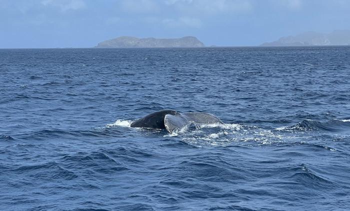 クジラ222b