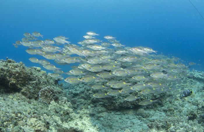 根魚211b