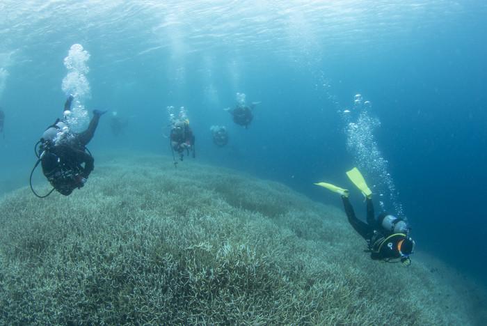 枝サンゴ9b