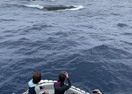 クジラ212b