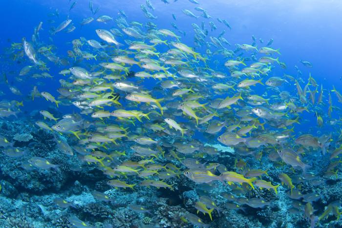 根魚214